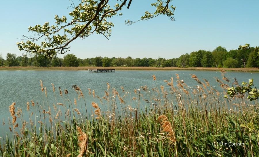 Broesaer Teich