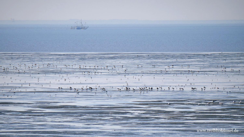 Fischkutter und Zugvögel im Wattenmeer