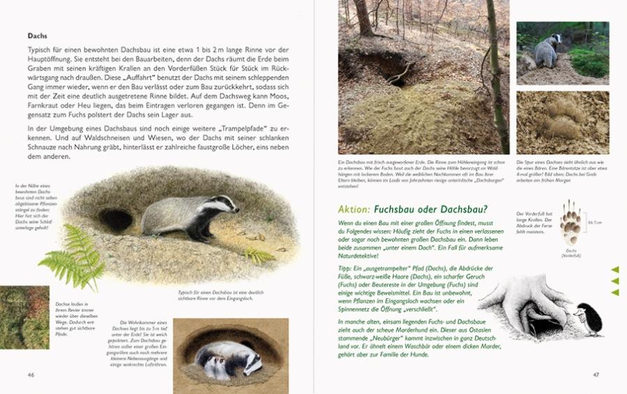 Naturbuch_Dachs–46-47