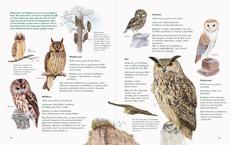 Naturbuch_Eulen 94-95