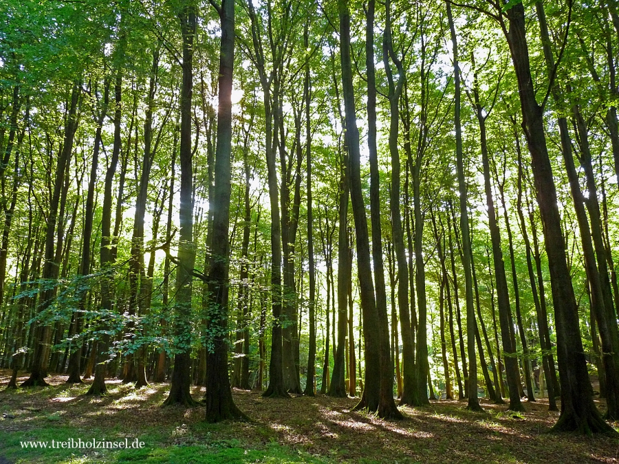 nationalpark jasmund buchenwald